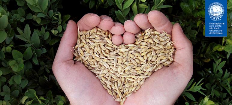 immagine di una mano che racchiude del riso